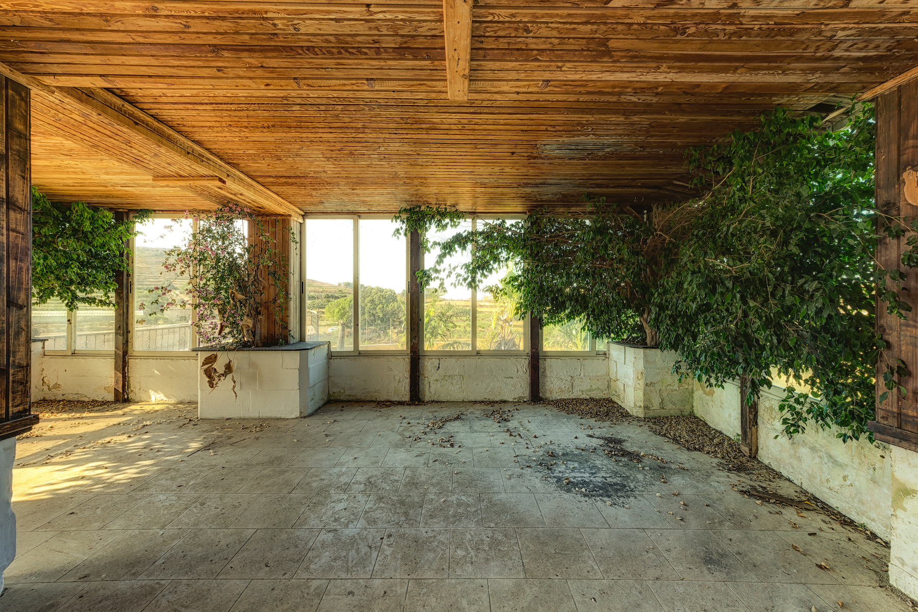 Trees in abandoned buildings by Stefan Baumann