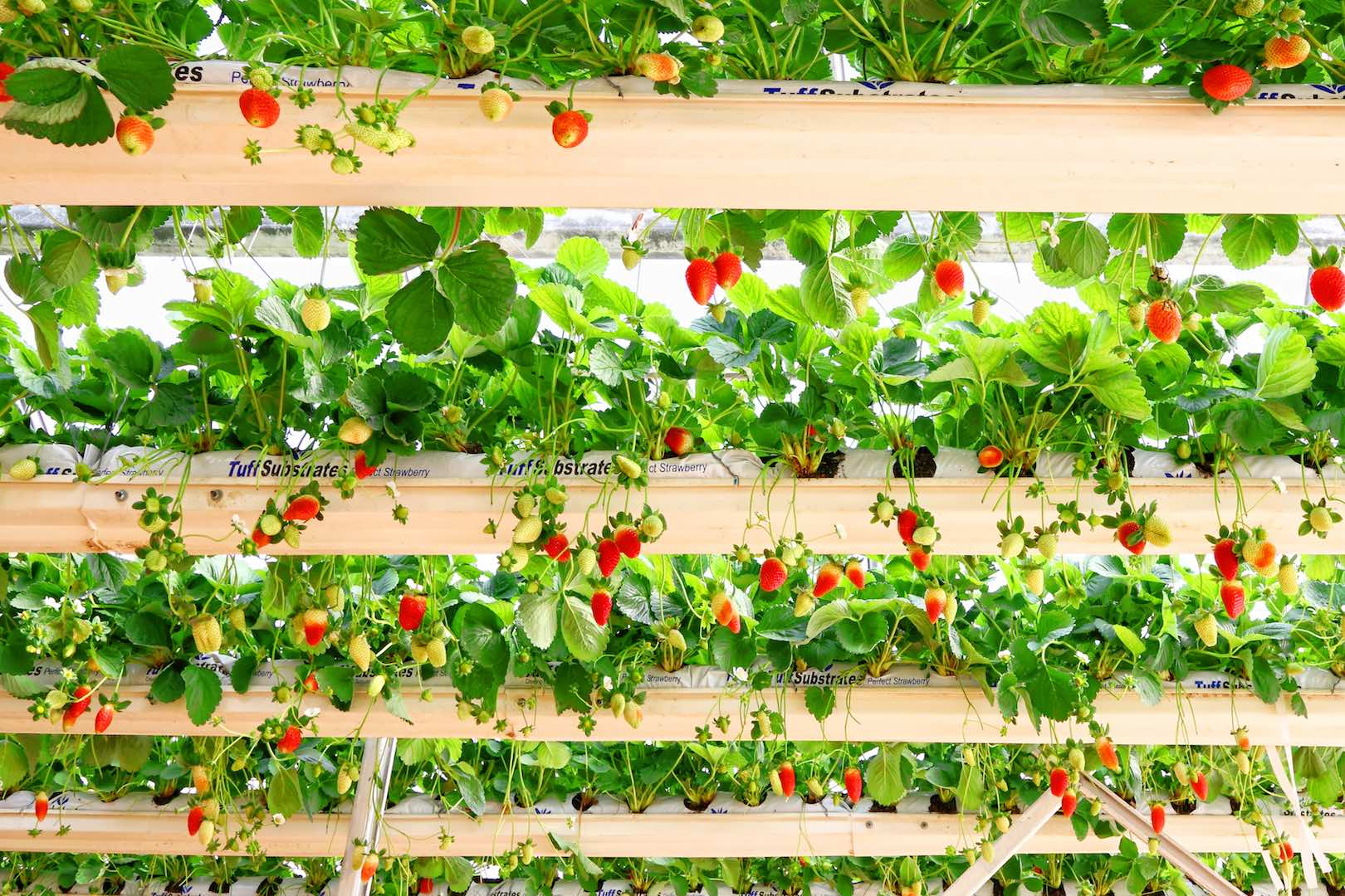 Hydroponics_Cultivate Food Without Soil