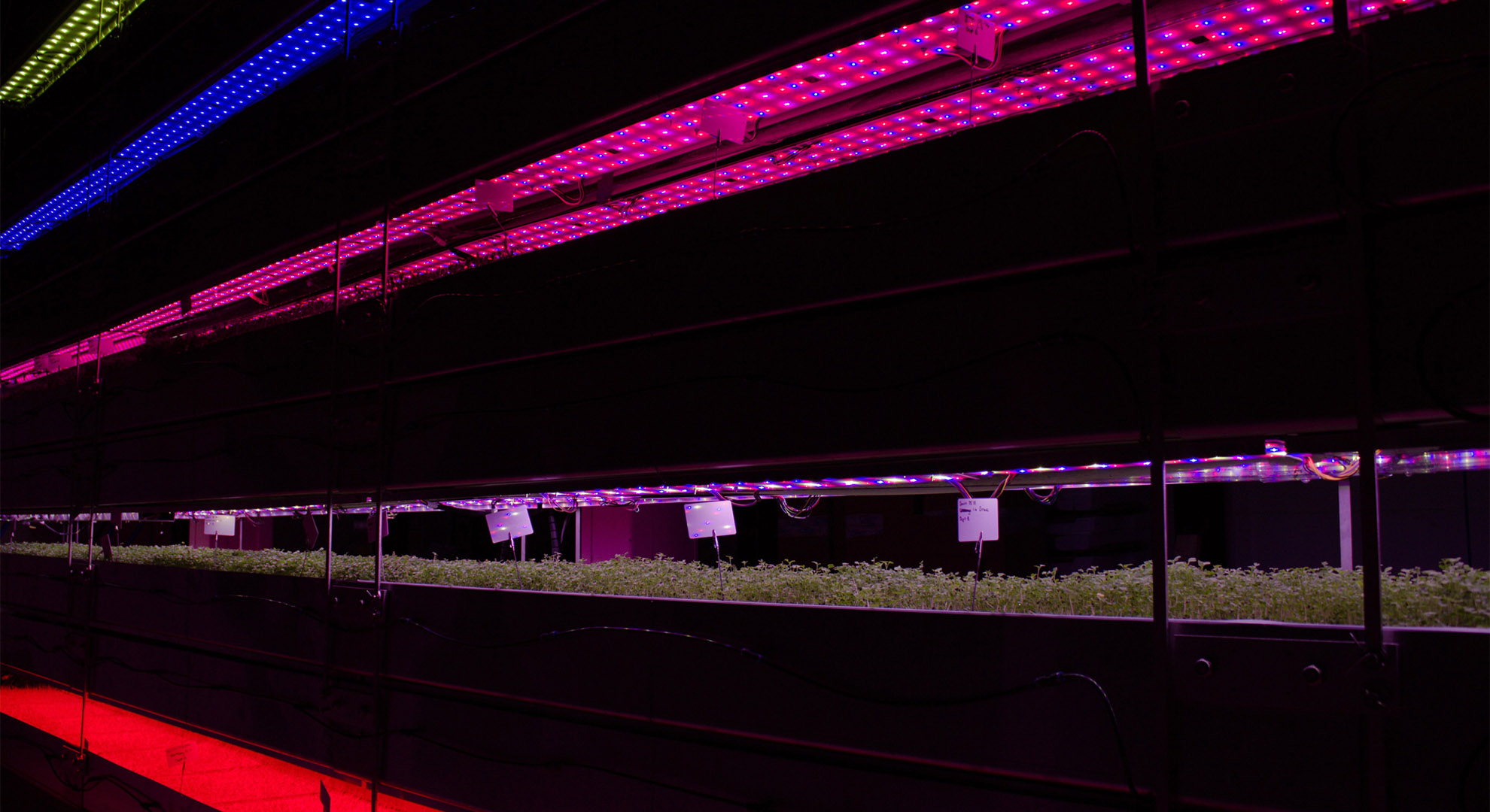 A different growing system for urban agriculture.